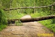03. Baum auf Fahrbahn, Tyrolsberg > Woffenbach